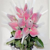 Quality Rose Flower Protection Bud Net China for sale