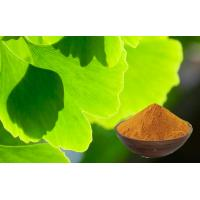 Quality Pure Ginkgo Biloba Extract Powder For Improving Mental Performance for sale