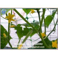Quality Hot Selling Hdpe With Uv 15x15cm Mesh Green Plant Support Net Plant Climbing Net for sale
