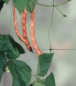 Quality Plant  support netting / climbing plant mesh/plant support mesh for sale