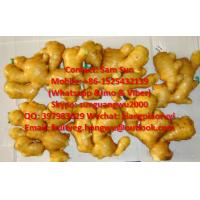 Quality Fresh Ginger to USA market for sale