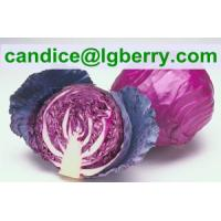 Quality High quality red cabbage extract /anthocyanin for sale