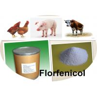China Broad spectrum Antimicrobial Drugs 98% Florfenicol CAS:73231-34-2 Strongly Interfere With Bacterial Protein Synthesis on sale
