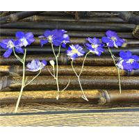 Quality Candle Decoration Dried Flower Art , Larkspur With Stem DIY Pressed Flowers for sale