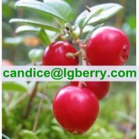 Quality Wild Lingonberry Proanthocyanidins /OPC/lingonberry extract for sale