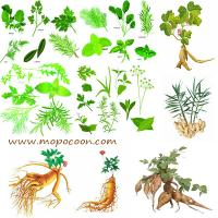 China Chinese Wolfberry Root-Bark Extract on sale