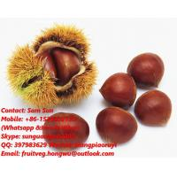Buy cheap China Fresh Chestnut from wholesalers