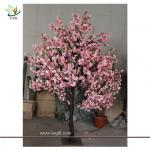 Best UVG CHR074 Flowering Cherry Trees 8ft high wholesale
