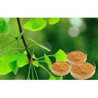Quality Pure Ginkgo Herbal Extracts For Cerebral And Microcirculation Improvement for sale