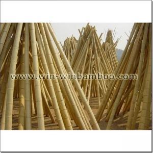 China Moso Mao Nan bamboo poles for contructions or garden on sale