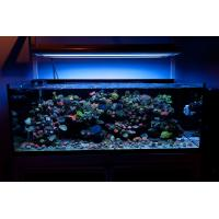 Marine fish tank maintenance led lighting 2017 fish tank for Fish tank lighting