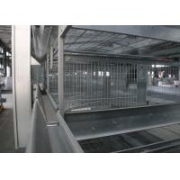Quality Vertical Layer Poultry Farming Equipment Effectively Prevent Infectious Diseases for sale