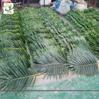 Best UVG indoor cheap plastic palm tree leaves green fake leaves wholesale for party decoration PTR062 wholesale