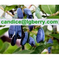 Quality 3%-40%OPC Powder Sweetberry Honeysuckle for sale