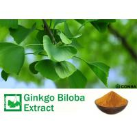 Quality 100% Natural Ginkgo Biloba 24 6 Extract For Helping Improve Memory for sale