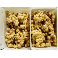 Buy cheap Fresh Chinese young ginger, old ginger,organic,vegetable,spices,150g,big size from wholesalers