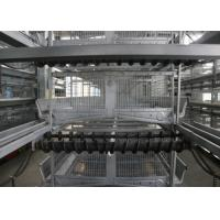 Quality Modern Poultry Raising Equipment Suitable For Closed Chicken House for sale