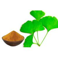 Quality Low Pesticide Residue Ginkgo Biloba 24 6 Extract For Pharmaceutical Raw Material for sale