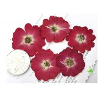 China Diameter 3.5CM Red Dried Flowers , Dry Rose Flower For Valentines Day Party on sale