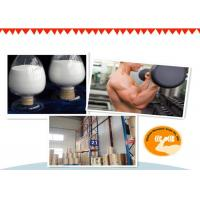 Quality 99% Purity Testosterone Isocaproate Test Iso Powder And Oil For Lean Mass Gaining for sale