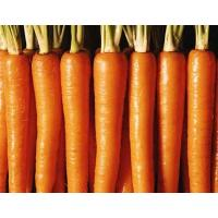 Quality Fresh carrot, frozen carrot, China vegetable, yellow big size,carota, organic for sale