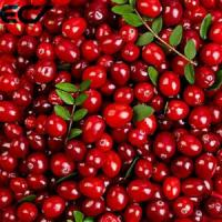 Buy Anti Aging Organic Food Ingredients Freeze Dried Cranberry Powder Prevents Scurvy at wholesale prices