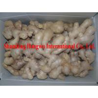 Quality Organic ginger from China for sale