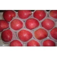 Quality Big Bright Red Sweet Organic Apple Thick Skin From Shanxi QinGuan For Storage for sale