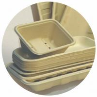 Quality BAGASSE BIO-DEGRADABLE TRAY, 100% BAGASSE RAW MATERIAL, STURDY AND PRETTY for sale