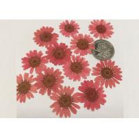 Quality Mirror Decoration Dried Pressed Flowers Material For DIY Handicrafts for sale