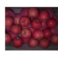Buy 2013 New fresh red fuji apple, organic apple green plant at wholesale prices