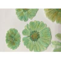 Quality Mint Green Dyed Dried Pressed Flowers Handmade For Press Art Painting Material for sale