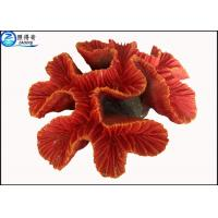 Buy cheap Fake Coral Natural Aquarium Decorations Fish Tank Background with Silicone and Polyresin from wholesalers