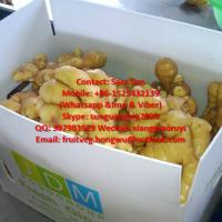 Quality 200G up Fresh Ginger to UAE Market for sale