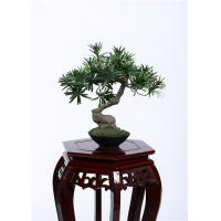 Quality 28cm Bonsai Pine Tree 100% Botanically Accurate Structure Traditionally Bright Spot for sale