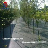 Quality garden ground cover fabric / weed barrier mat / plastic pp anti weed agro weed control for sale