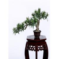Quality Buddhist Bonsai Pine Tree 25*52cm No Watering Trimming Timeless Beauty for sale