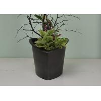 Quality Flower / Green Plant Self Watering System Bsci Certification With Absorbent Wool for sale