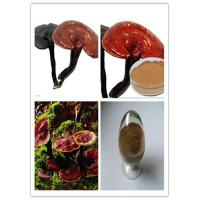 China Ganoderma lucidum extract,PLANT EXTRACT,Solvent Extraction on sale