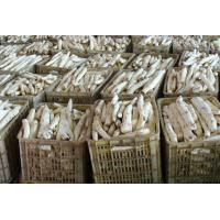 China Rhizoma Dioscoreae Fresh Chinese Herbal Medicines Yam For Spleen And Stomach on sale