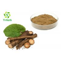 China Great Burdock Root Herbal Extract Powder P.E. Arctigenin 10%-40% Arctiin Powder on sale