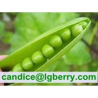 Buy cheap Natural Pea protein Isolate powder from wholesalers