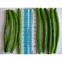 China IQF Frozen Green Beans S , M Size on sale