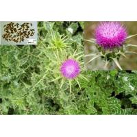 Quality Milk Thistle extract & 80% Silymarin for sale