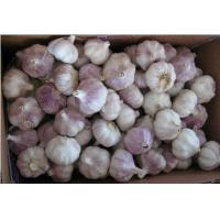 Quality Fresh Garlic Normal White Garlic in 10KG Carton for sale