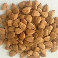 Best bitter apricot kernels wholesale