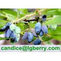 Quality Pure Natural Lonicera caerulea Powder for sale