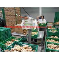 Quality Organic ginger/Organic dried Ginger with high quality in the Germany Market for sale