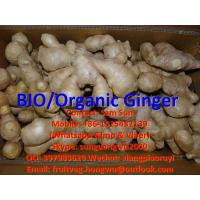 Quality Organic Ginger to Germany Supermarket for sale