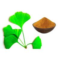 Quality GACP planting base Pure Ginkgo Extract EP9.0 Standard food grade ethanol solvent for sale